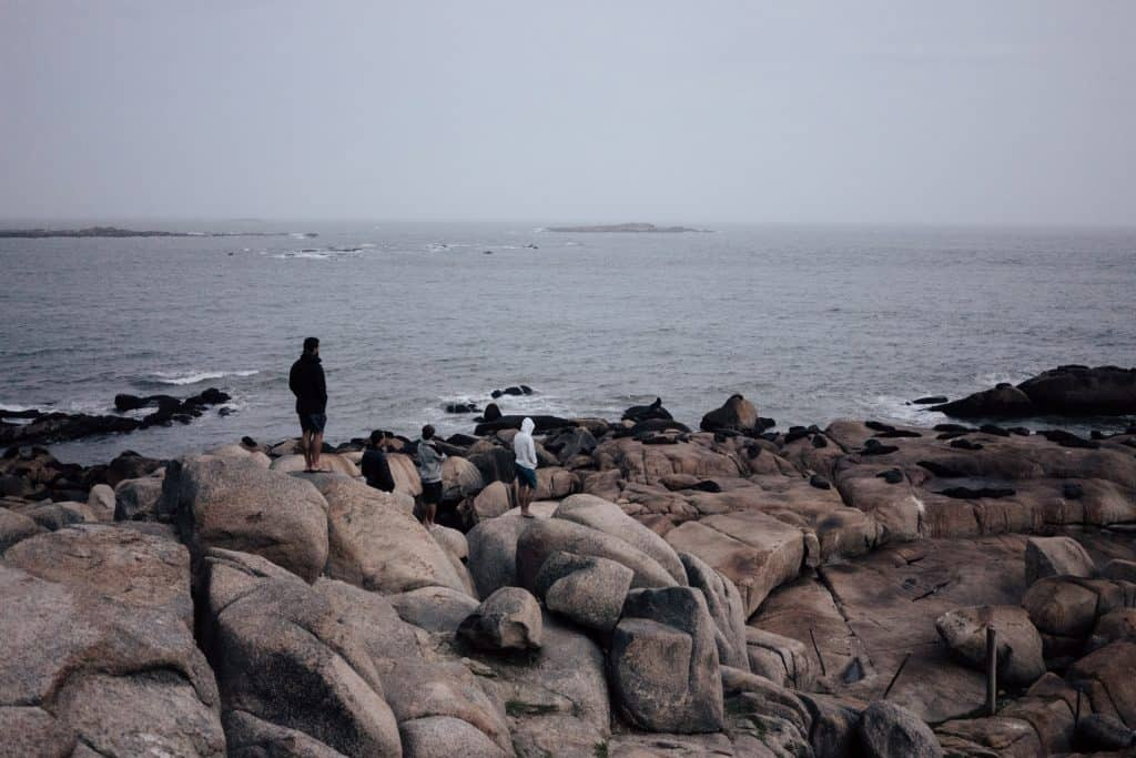 4 men look out into the distance at a rock populated with sea lions