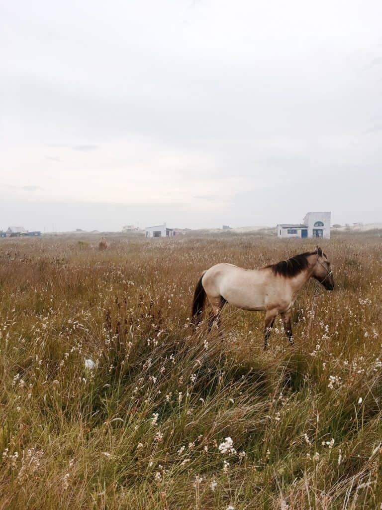Horse in field of cabo polonio