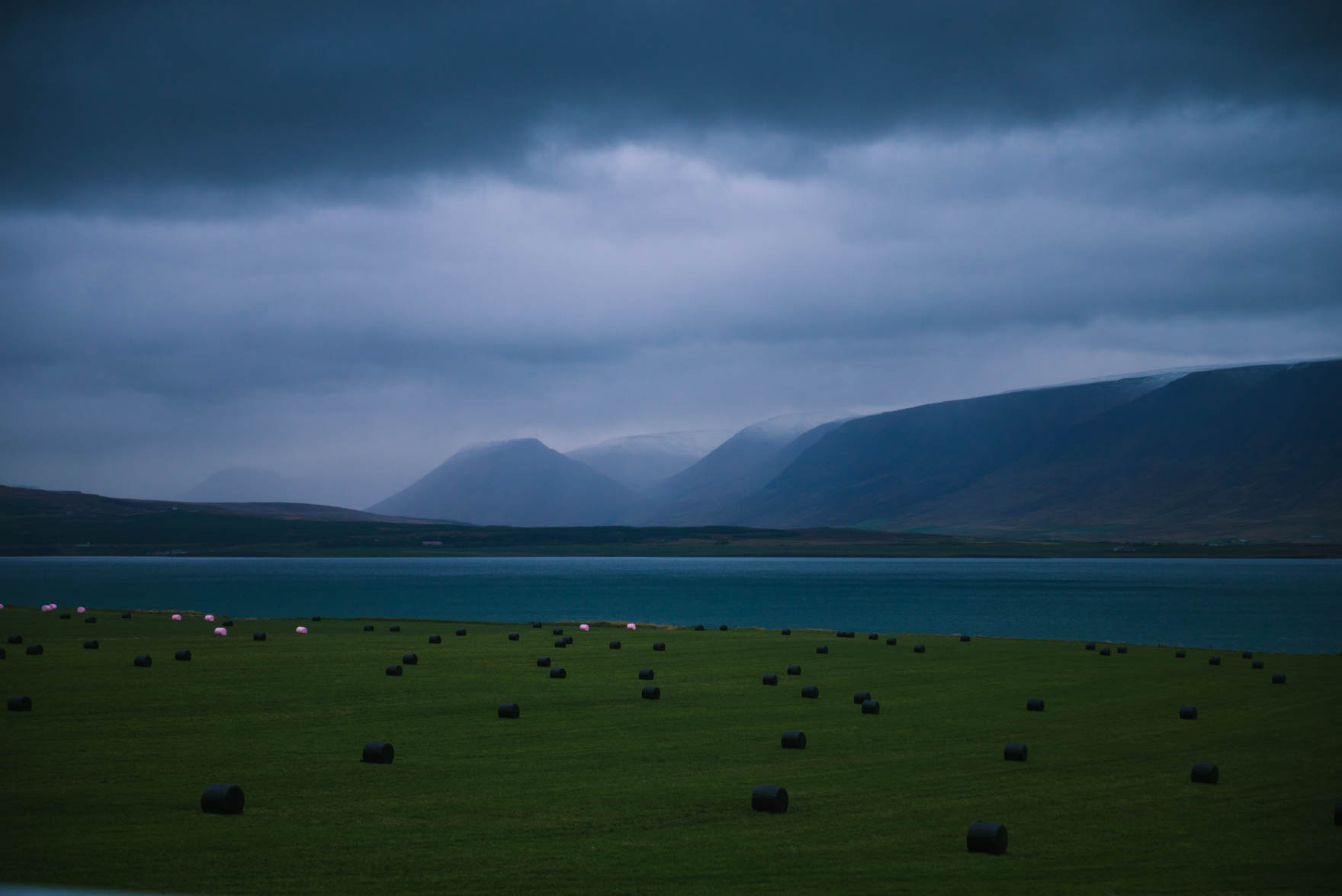 Wrapped haybales in the grassy lawns of a dark and misty day