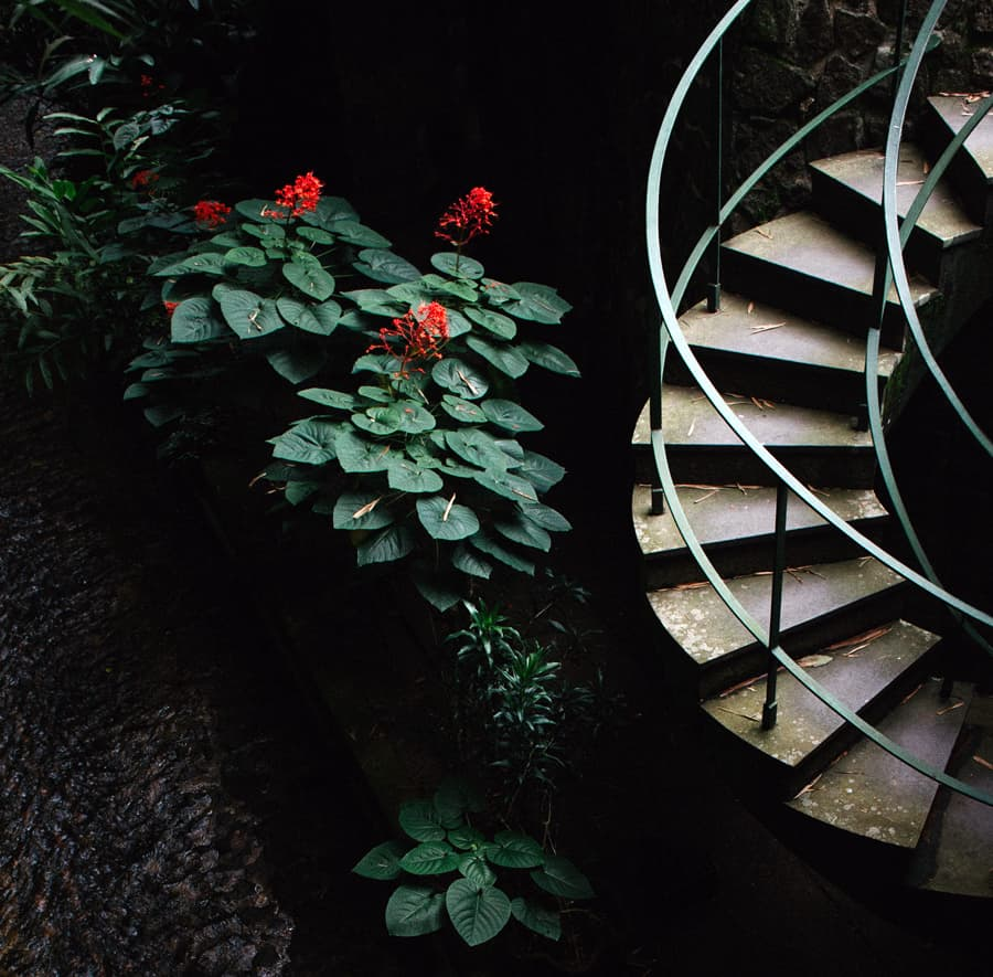 Spiral staircase running alongside plants with red flowers