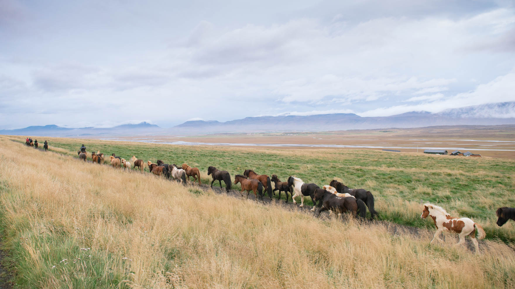 A long line of horses run in Iceland's pastel backdrop