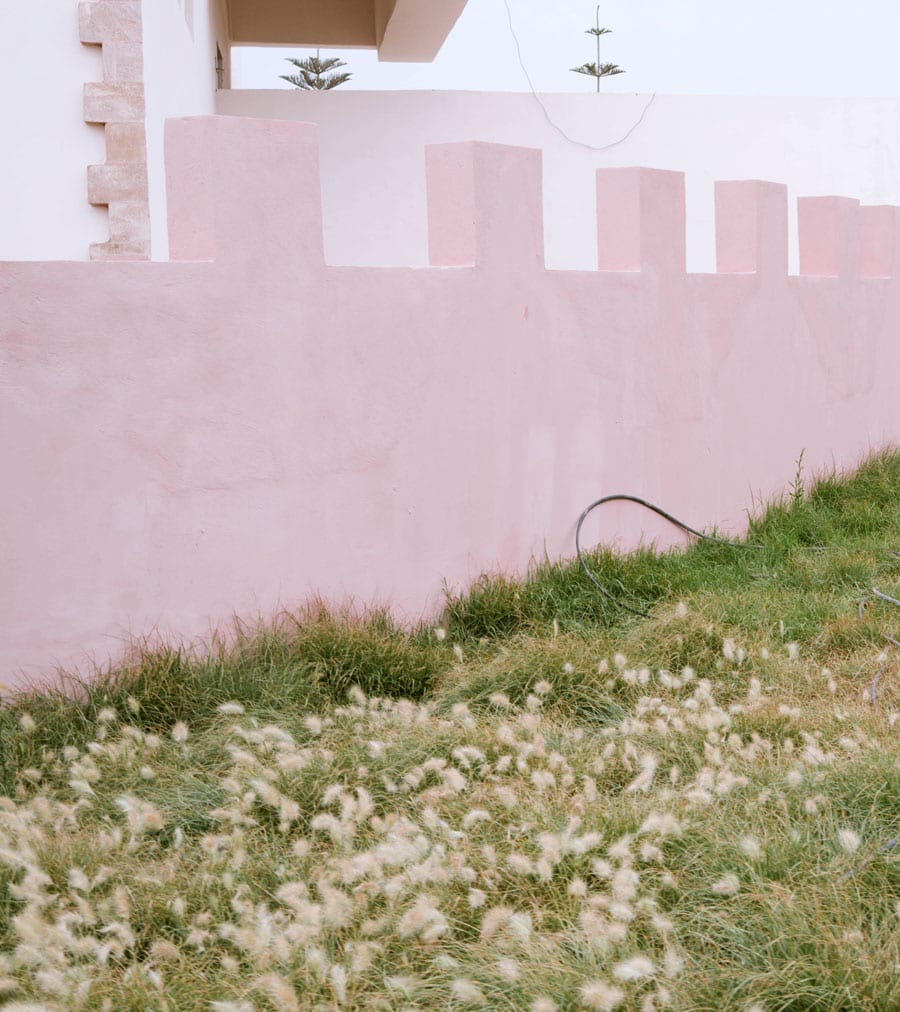 Thrush in the foreground of a pink sawtooth wall