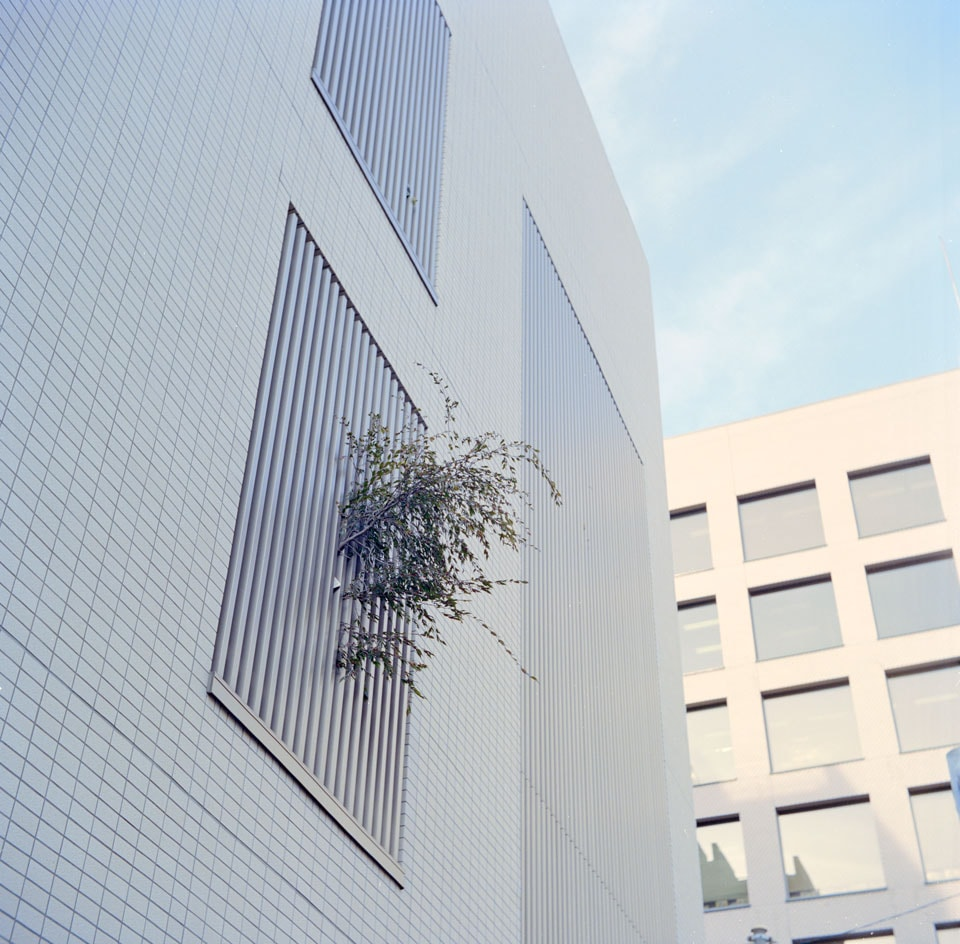 Foliage burst through the slated windows of Tokyo's metropolis